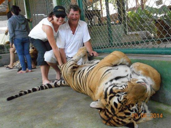 Phuket Graceland Resort & Spa : Tiger World