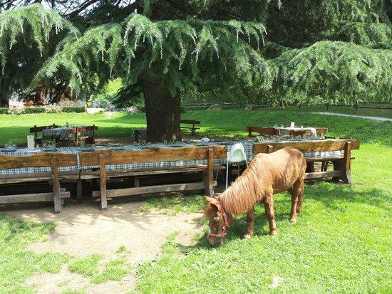 Agriturismo Ferdy: aggiungi un posto a tavola...