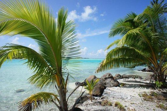 Moana Adventure Tours: Private island (Mutu) for barbecue!!!