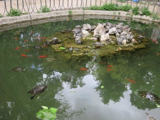 National Garden: The pond had many turtles lazing in the sun!