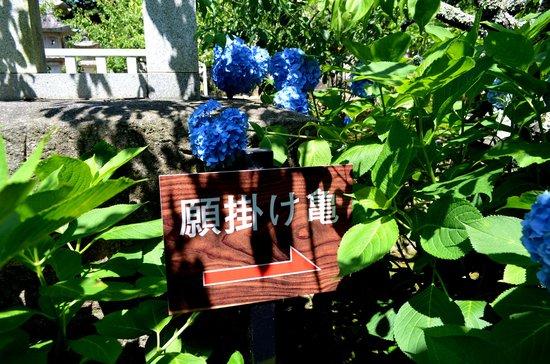 Honkoji Temple: 本光寺のあじさい
