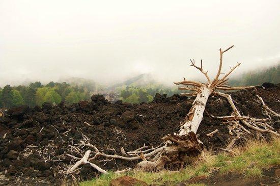 Etna Mareneve Escursioni: skeleton trees left behind from the lava flow