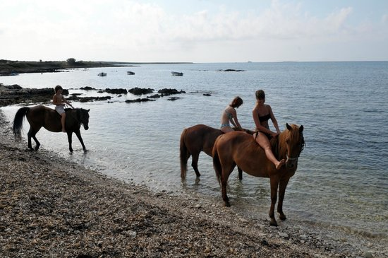 Medulin, Croacia: SWIMMING WITH HORSES