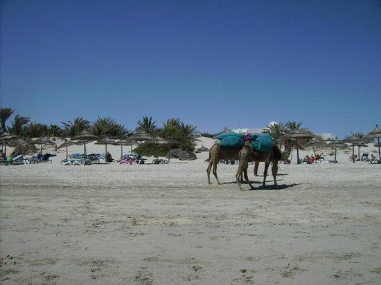 Vincci Resort Djerba : Strand