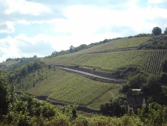 Schloss Rheinfels: Vineyards in St. Goar
