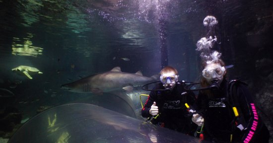 Manly Sea Life Sanctuary - Shark Dive Xtreme : Grey Nurse Shark