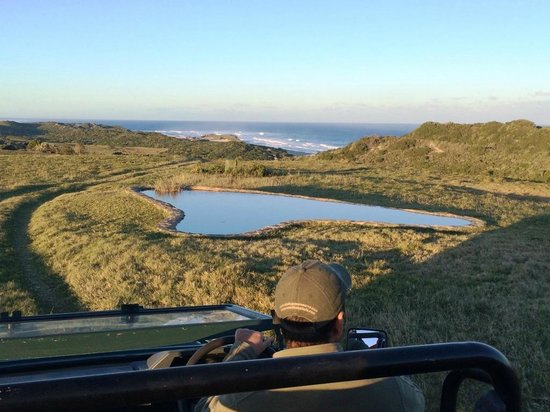Oceana Beach and Wildlife Reserve: Game Drive