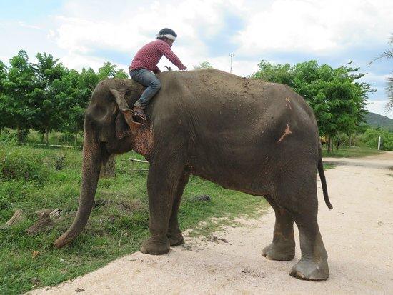 ElephantsWorld: bien atendidos