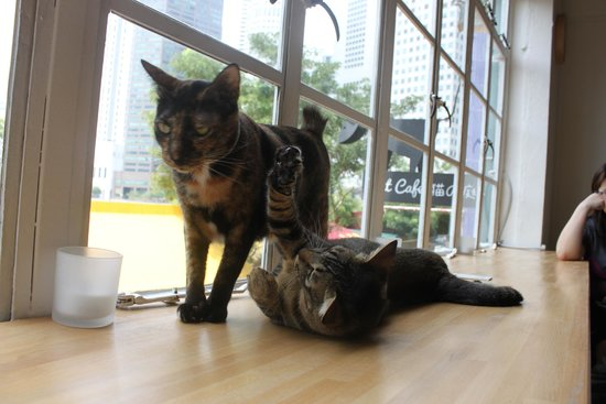 Cat Cafe Neko no Niwa Singapore Map,Tourist Attractions in Singapore,Things to do in Singapore,Map of Cat Cafe Neko no Niwa Singapore,Cat Cafe Neko no Niwa Singapore accommodation destinations attractions hotels map reviews photos