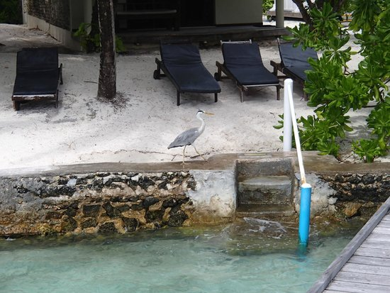 Ellaidhoo Maldives by Cinnamon : Sunbeds