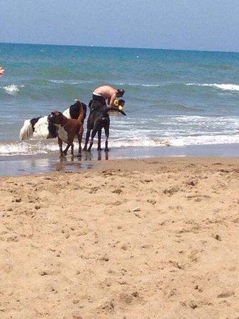 Dog Beach: Harry e Betty Blu