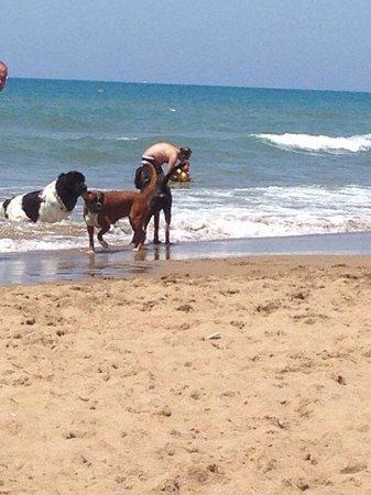 Dog Beach: Sempre Harry e Betty Blu