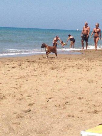 Dog Beach: Betty Blu con la sua pallina
