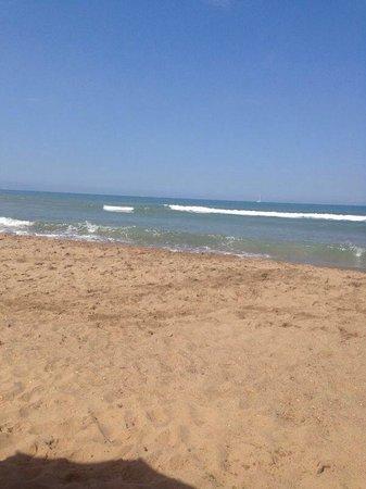 Dog Beach: Che bello su settimana, tranquillissimo