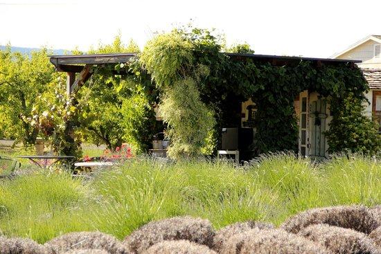 Hood River Lavender: Lavender Shop