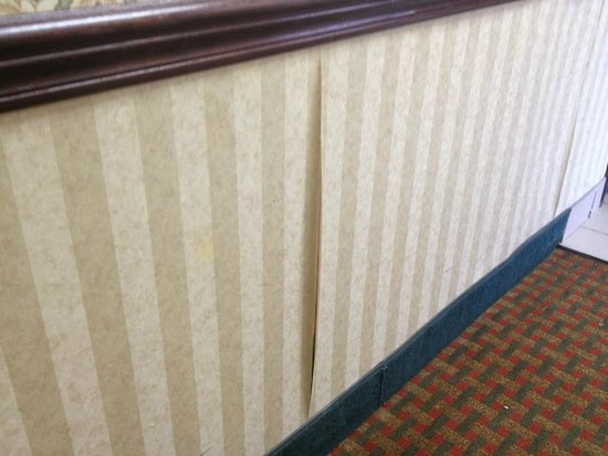 Quality Inn & Suites: 1st floor wallpaper