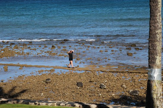 Aston at Papakea Resort : low tide walk out and see the new coral and hidden creatures