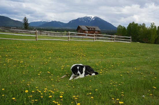Echo Valley Ranch & Spa: Lovely Benji on the grasslands