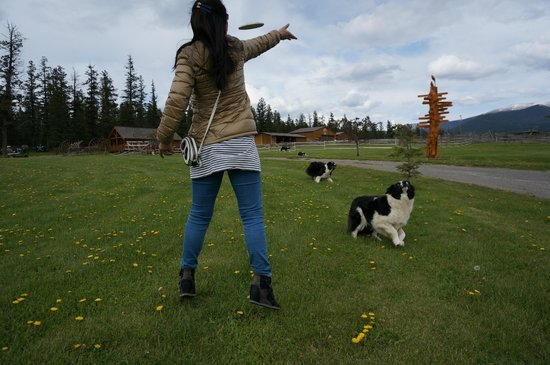 Echo Valley Ranch & Spa : The dogs looooove playing with the guests even though we just met