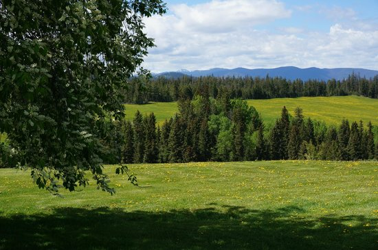 Echo Valley Ranch & Spa: Grasslands covered by a mesmerizing blanket of wild flowers