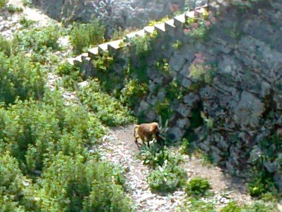 """La Citadelle de Besançon : Uno dei babbuini """"ospiti"""" dello zoo"""