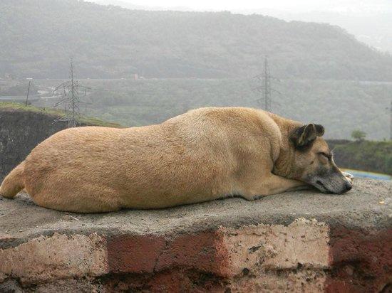 Zara's Resort: Resting Dog at Khandala
