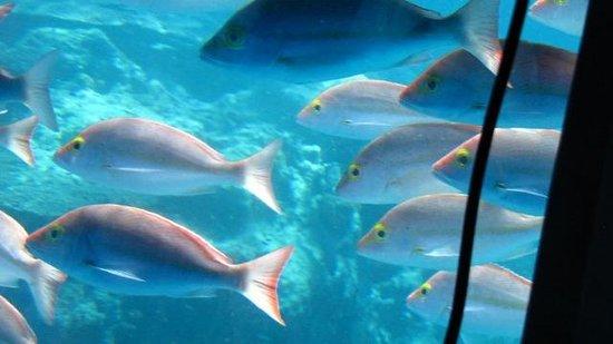 Heron Island Resort: School conversations