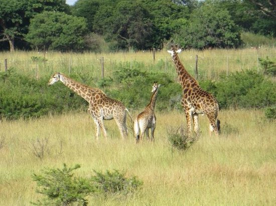 Lions Valley Lodge: Animals on the game reserve