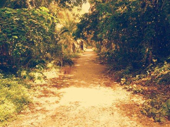 Le Jardin d'Essai du Hamma : Jardin d'essai