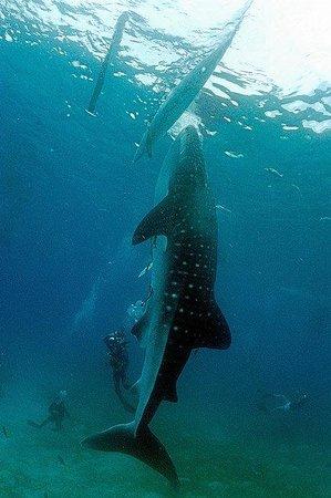 Eden Resort: шоу с акулами