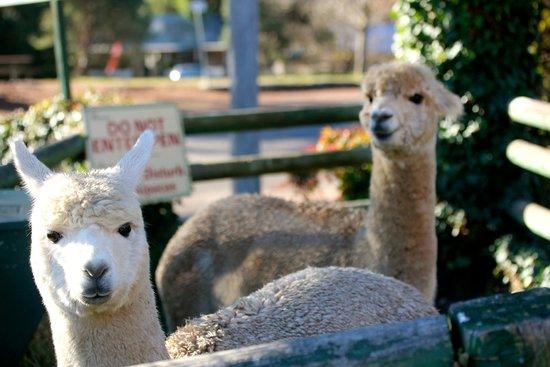 Australian Alpaca Centre