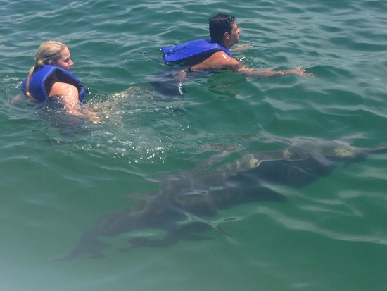 Aquatic Adventures: Fun with dolphins !