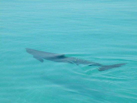 Catamaran Echo: One of many dolphin we saw!