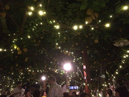 Da Paolino Lemontrees : Beautiful Setting!