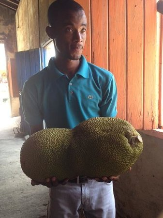 Belmont Estate : Our tour guide holding a Jackfruit