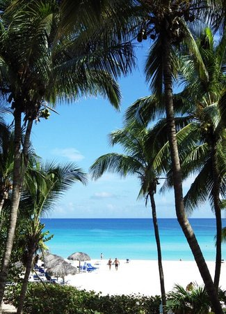 Melia Las Americas: your view from the hotel door
