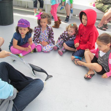 Cape Ann Whale Watch: Learning time