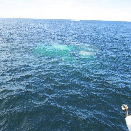Cape Ann Whale Watch: wait for it wait for it!
