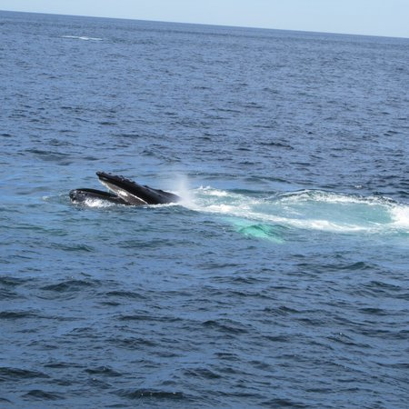 Cape Ann Whale Watch: there she goes!