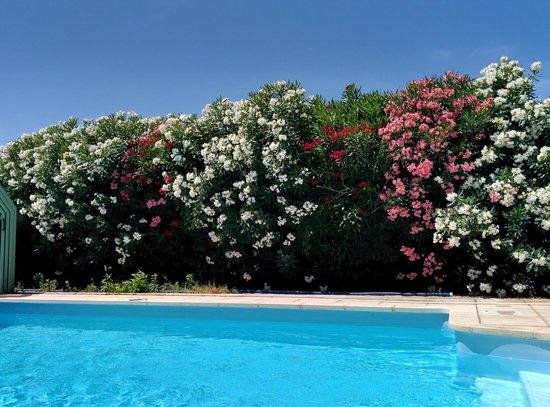 Villa Thebaide : Au bord de la piscine cernée de fleurs...