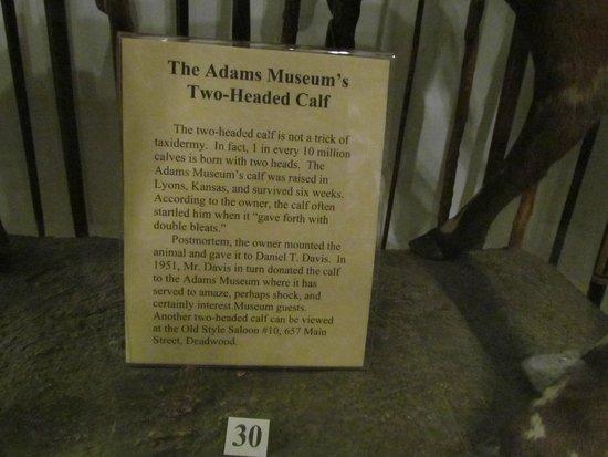Adams Museum: 2-headed