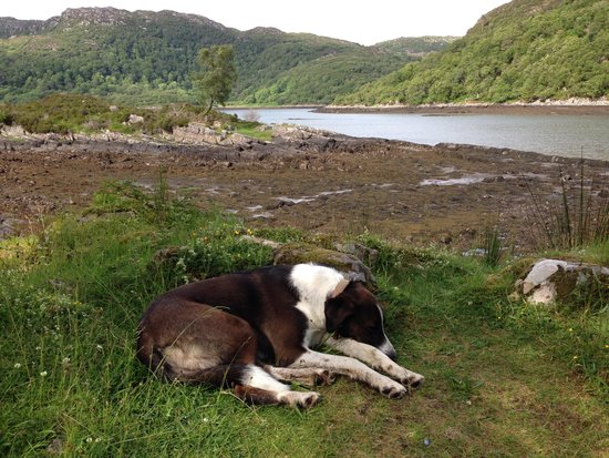 Eilean Shona House and Cottages: my view - with Oscar the dog!