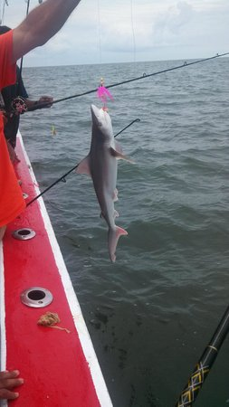 Martha marie fishing charters lewes de omd men for Fishing charters lewes de