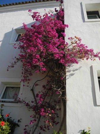 Candia Park Village: Blumenpracht