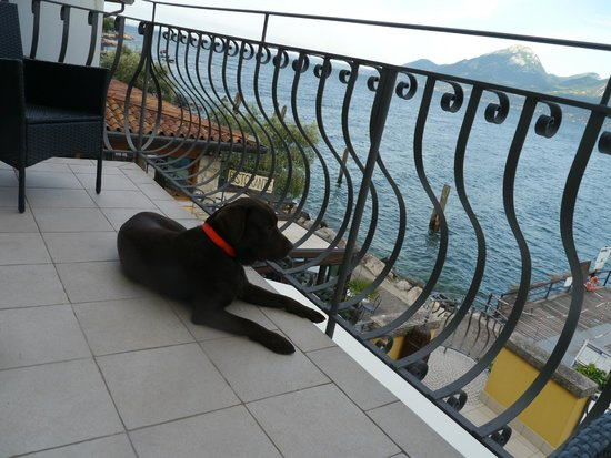 Hotel Brenzone: Nico- il Bestione.
