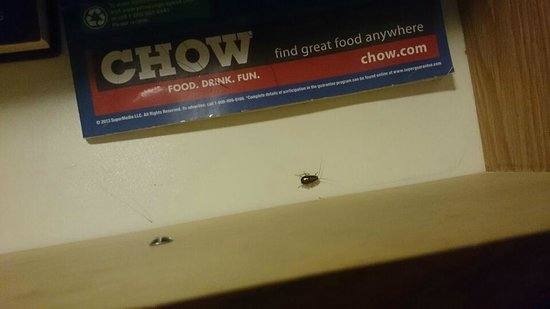 Quality Inn & Suites Palm Island Indoor Waterpark: GROSS - Roach ALERT