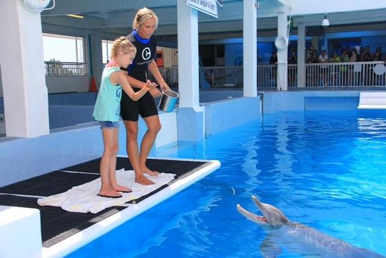 "Clearwater Marine Aquarium : ""Trainer for the Day"""