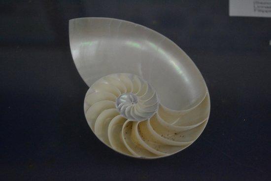 Museo Malacologico: Shell, Museum, Cupra Marittima