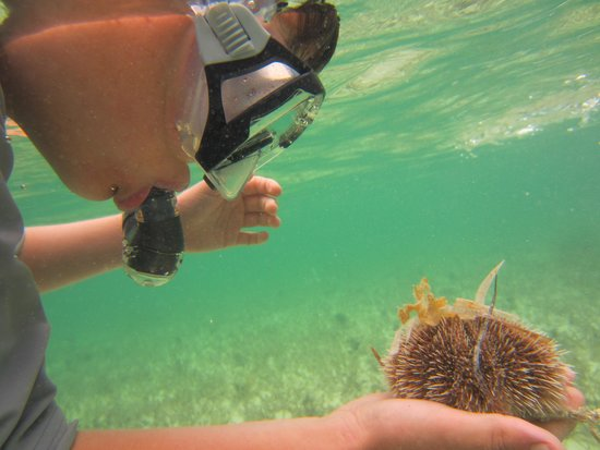 Swain's Cay Lodge : An Indian Sea Egg