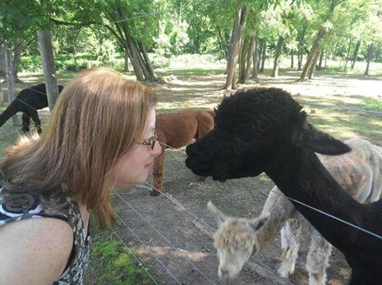 Chimney Hill Estate & Ol' Barn Inn: alpacas and me
